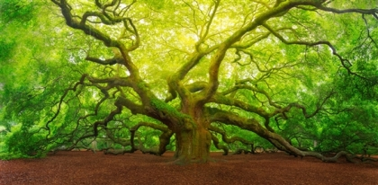 angel_oak_tree_2017